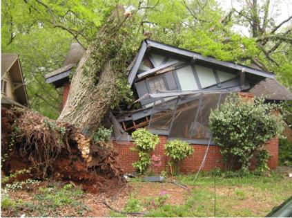 Mak-home-tree-destroyed