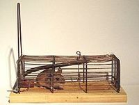 Better mousetrap_from wikipedia