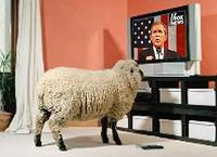 Sheeple-tv