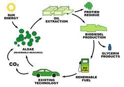 Algae_biodiesel