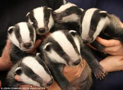 6-Badgers