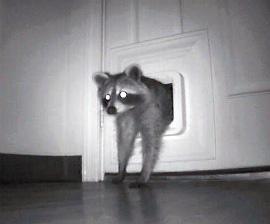& Dana Blankenhorn: The Problem with Pet Doors Pezcame.Com