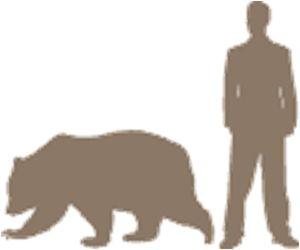 Human_Black_Bear_Size_Comparrison