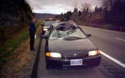Deer damage to car