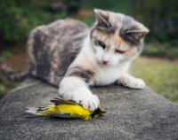 Cat-Bird-Murderer